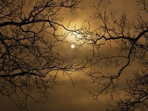 Branches Surrounding Harvest Moon by Robert Llewellyn