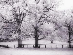 Trees and Fence in Snowy Field by Robert Llewellyn