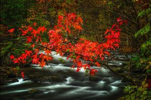 Fall in Smokies by Robert Lott