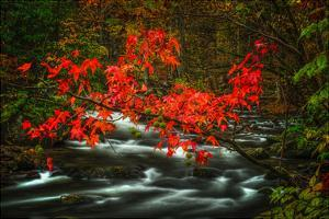 Fall in Smokies by Robert Lott