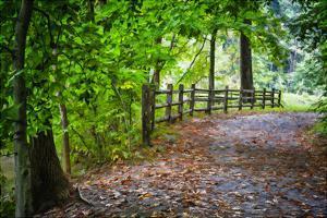 Laurels Pathway by Robert Lott