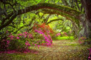 Magnolia Gardens by Robert Lott