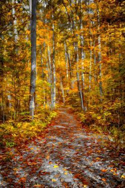 Ohiopyle Path by Robert Lott
