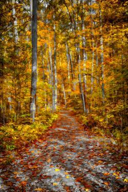 Ohiopyle Path by Robert Lott