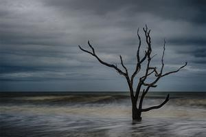 Tree on Botany Bay by Robert Lott