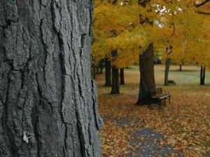 Park Benches under Autumn Foliage by Robert Madden