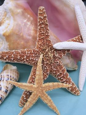 Dried Sea Stars Leaning on Shell by Robert Marien