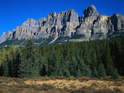 Forest and Castle Mountain by Robert Marien