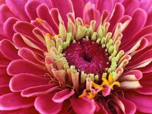 Pink Flower by Robert Marien