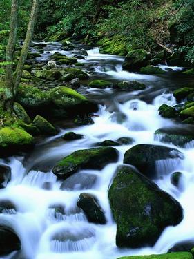 River Cascading Down Moss-Covered Rocks by Robert Marien