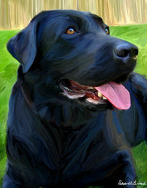 Handsome Lab by Robert Mcclintock