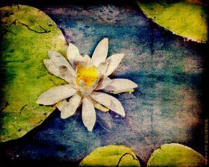 Kenilworth Lilies I by Robert Mcclintock