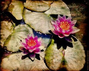 Kenilworth Lilies II by Robert Mcclintock