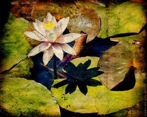 Kenilworth Lilies III by Robert Mcclintock