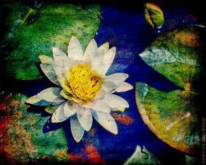 Kenilworth Lilies IV by Robert Mcclintock