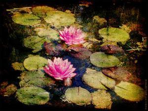 Lily Ponds I by Robert Mcclintock