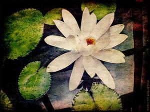 Lily Ponds III by Robert Mcclintock