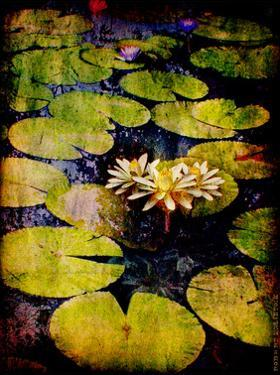 Lily Ponds IX by Robert Mcclintock
