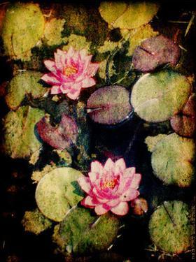 Lily Ponds VI by Robert Mcclintock
