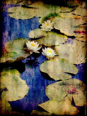 Lily Ponds VII by Robert Mcclintock