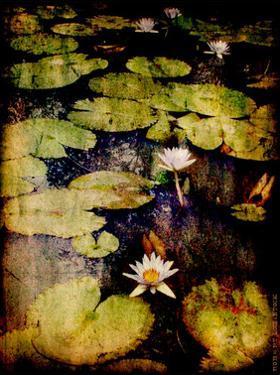 Lily Ponds VIII by Robert Mcclintock