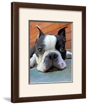 Moxley Boston Terrier by Robert Mcclintock