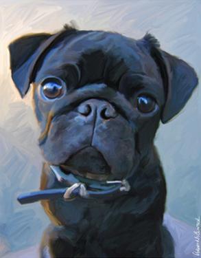 Pug Baby Blue by Robert Mcclintock