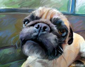 Walrus Pug by Robert Mcclintock