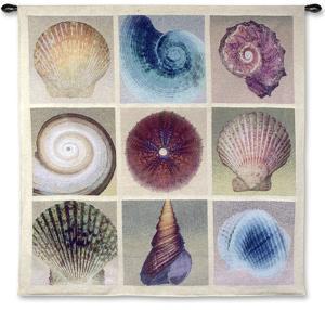 Shell Collection by Robert Mertens