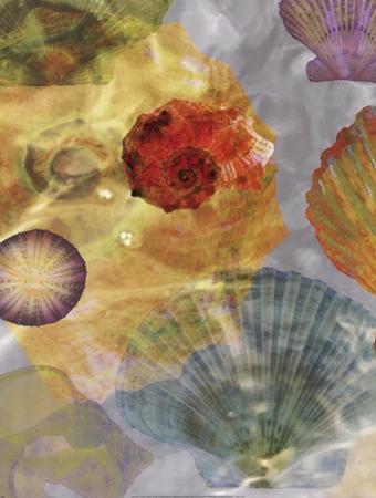 Shell Suite I by Robert Mertens