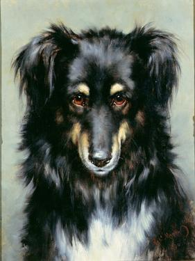 A Black and Tan Collie, 1890 by Robert Morley