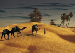 Palmeraie Dans le Sud Tunisien by Robert Putinier
