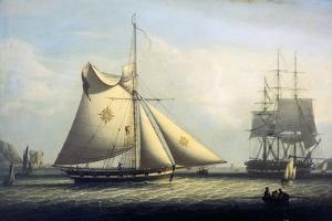 Maltese Cutter by Robert Salmon