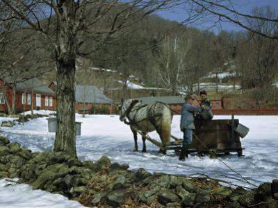 Farmer Collects Maple Sap for Boiling Down into Maple Syrup by Robert Sisson