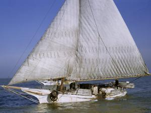 Skipjack for Oyster Fishing Sails on Choptank River by Robert Sisson