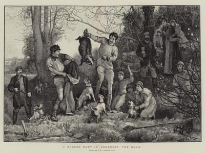 A Badger Hunt in Somerset, the Draw