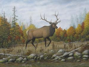 Autumn Elk by Robert Wavra