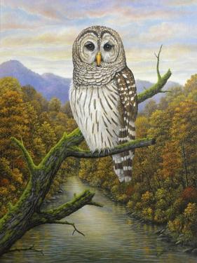 Barred Owl by Robert Wavra