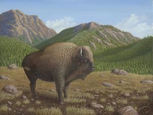 Bison by Robert Wavra