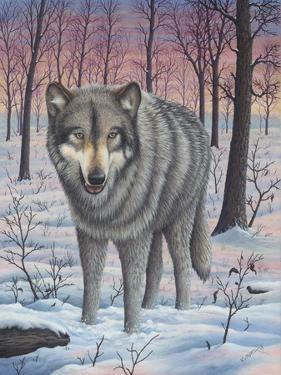Lone Wolf by Robert Wavra