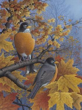Robins by Robert Wavra