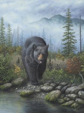 Smoky Mountain Black Bear by Robert Wavra