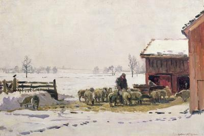 Feeding the Sheep in Winter