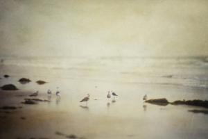 Gulls on a Beach by Roberta Murray