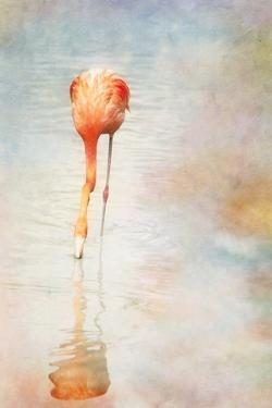 Homage to Audubon by Roberta Murray