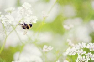 Honey Bee by Roberta Murray