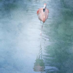 Pink Flamingo by Roberta Murray