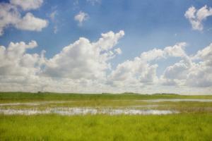 Prairie Slough in Summer by Roberta Murray