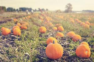 Pumpkin Patch by Roberta Murray
