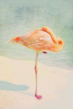 Resting Flamingo by Roberta Murray